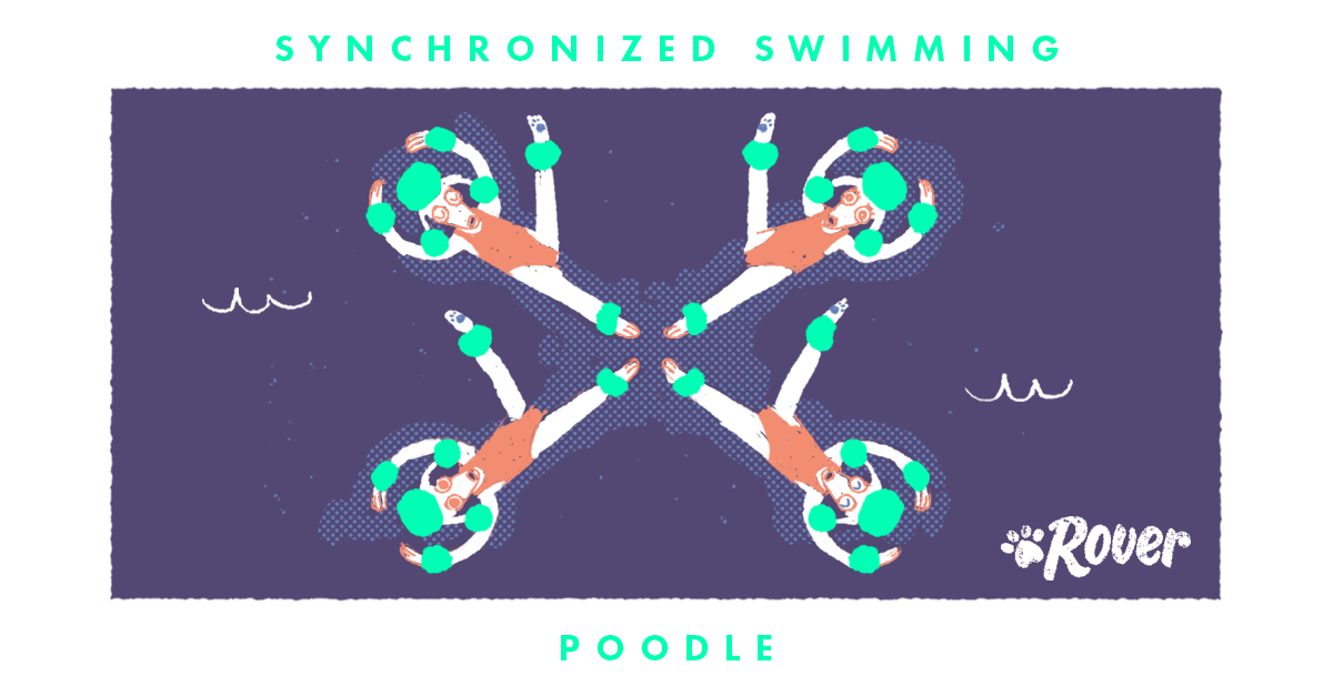 poodles as olympic athletes