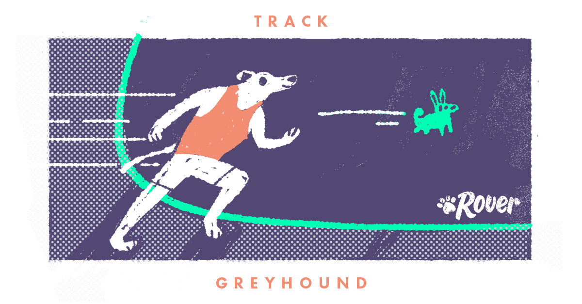 greyhound as olympic athlete track
