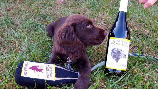 The 7 Best Dog-Friendly Wineries Near Washington D.C.