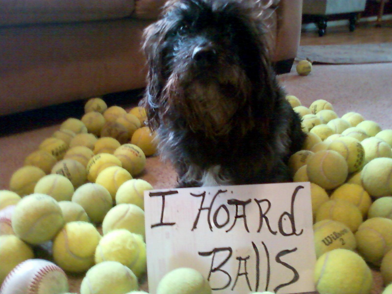 dog hoarding tennis balls