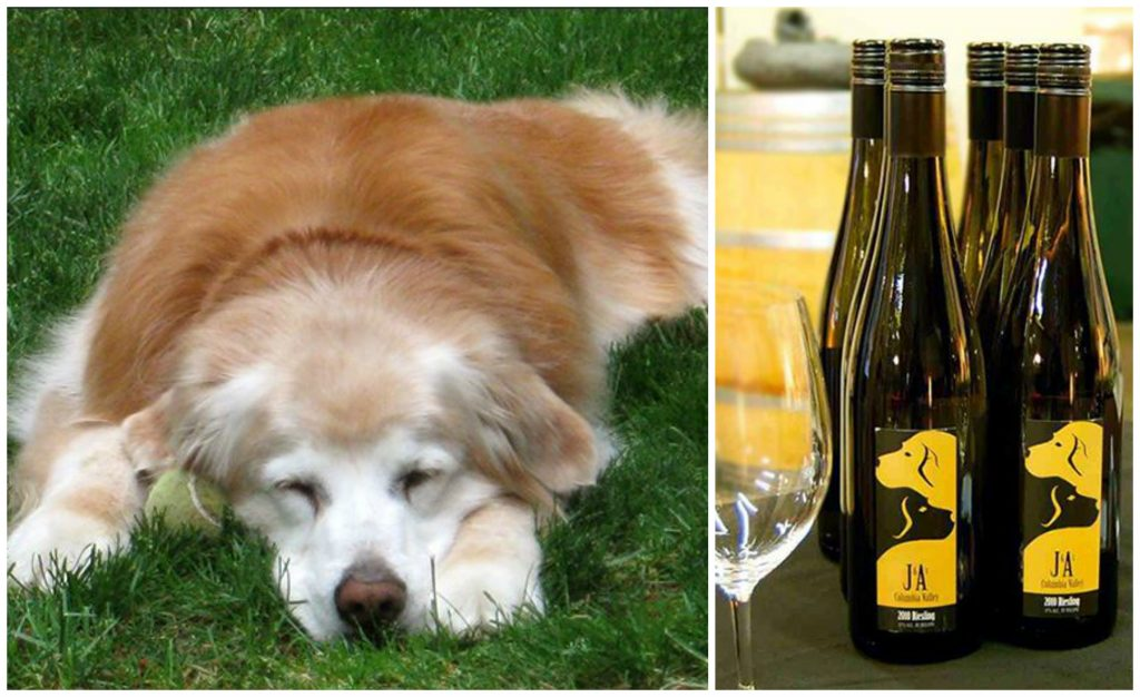 The winery's name was inspired by the owners' two dogs, Jake and Annie. Photos via J & A Winery.