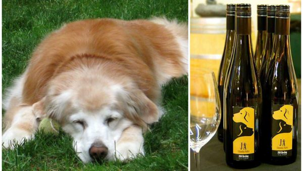 Top 9 Dog-Friendly Wineries Near Seattle