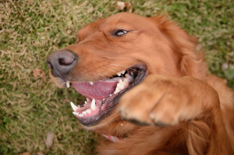 Sometimes rolling the grass just makes your dog happy. Photo via Flickr.