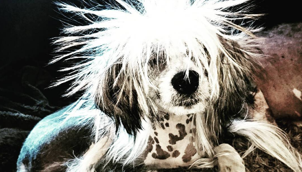 The Surprising Reason Dogs Hate Thunderstorms—and How to Help