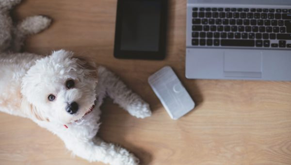 10 Websites Every New Dog Owner Should Bookmark