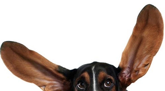 can you identify the dog breed by the ears quiz