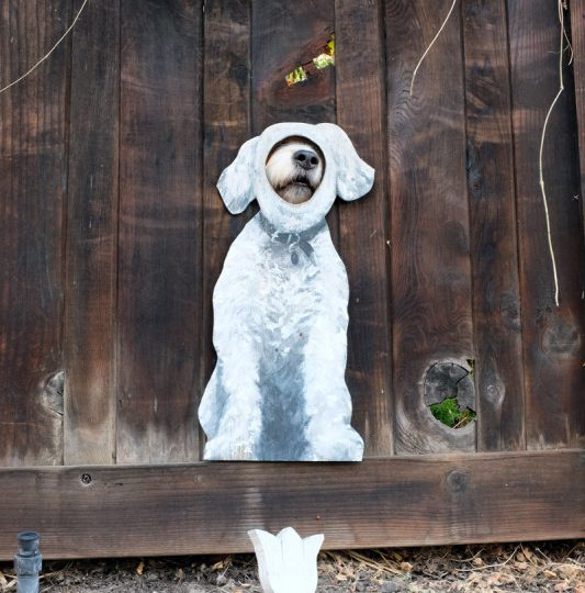 creative dog window