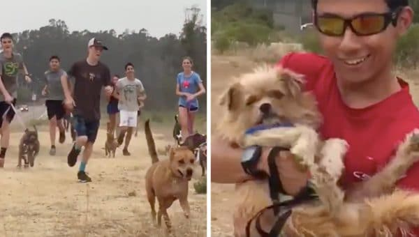 """Running Coach Launches """"Shelter Dog Run"""" Trend, Saves Lives"""