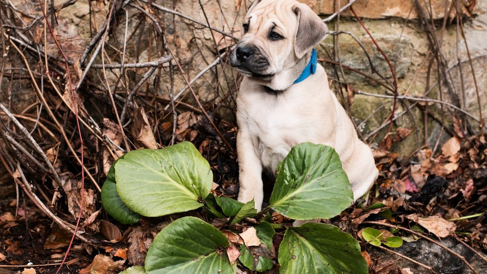 The 11 Most Poisonous Plants For Dogs