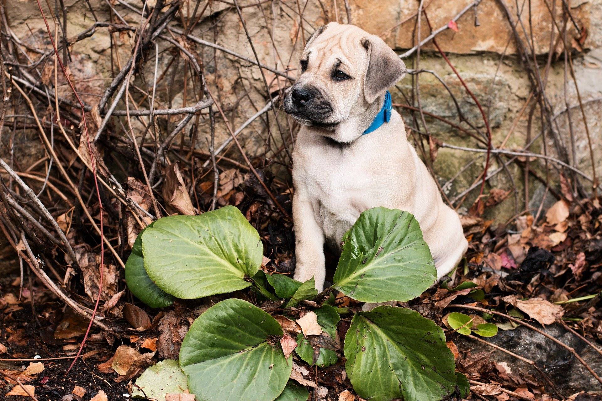 The 11 most poisonous plants for dogs rover izmirmasajfo
