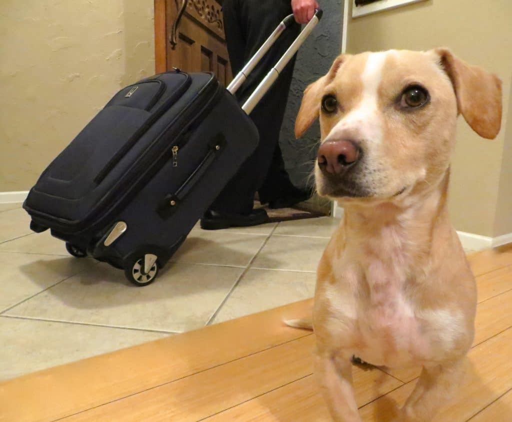 Traveling, with or without your dog, will never be the same.