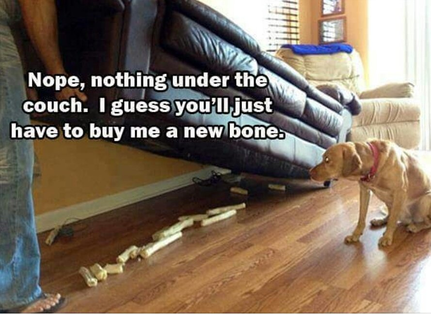 dog bone hoarder couch