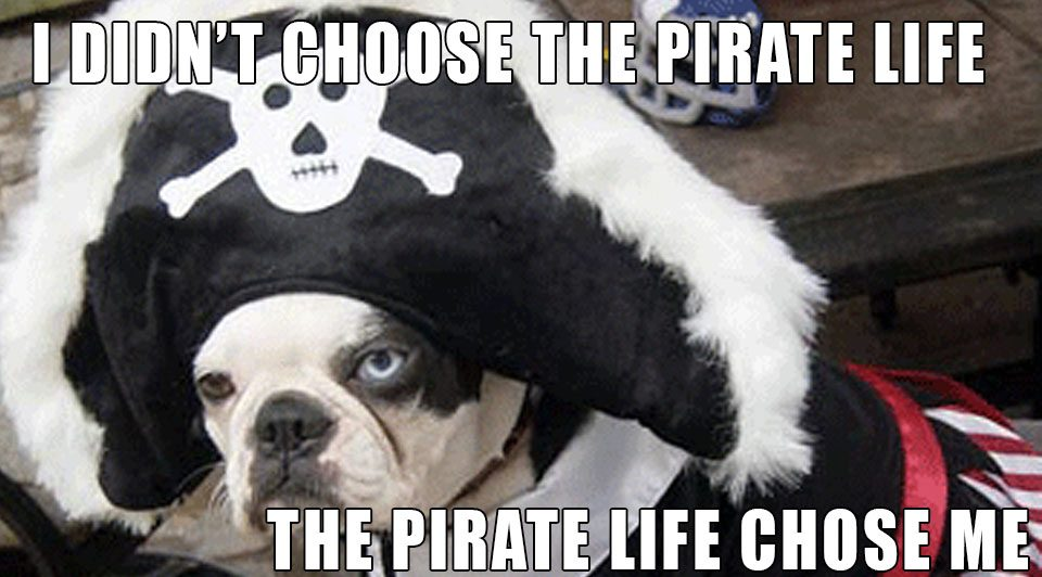 dogs boats pirate