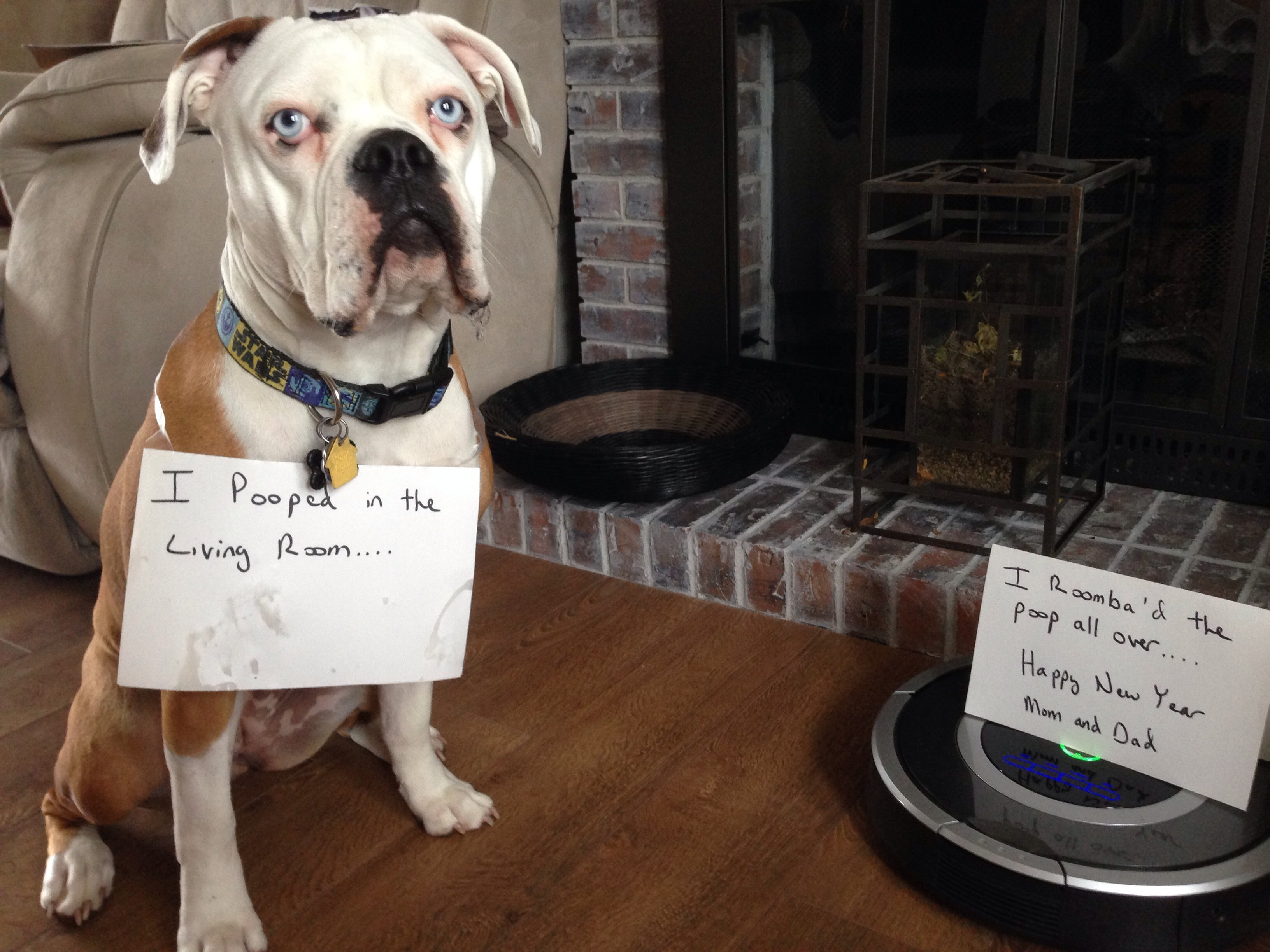 dogshaming roomba poop