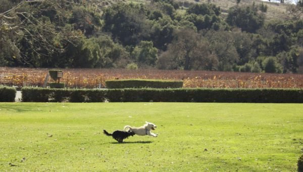 The 7 Best Dog-Friendly Wineries Near Los Angeles