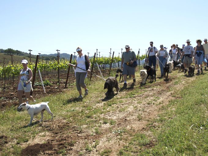 Hike the Kunde Estate with the winemaker and his dogs! Photo via USA Today.