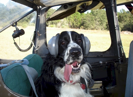 Dog Ear Protection Flying