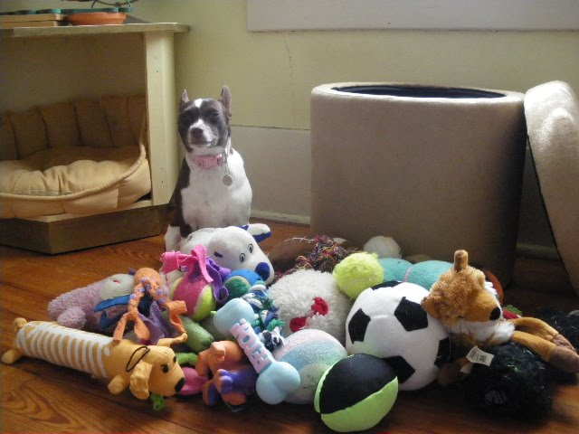 yes i need all of these stuffed animals dog horder