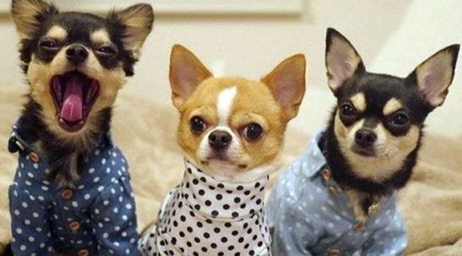 puppies in pajamas are basically the snooze button for your life