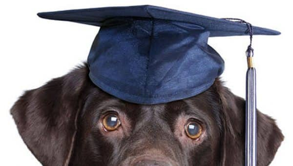 Can You Rank the Top 10 Smartest Dog Breeds?