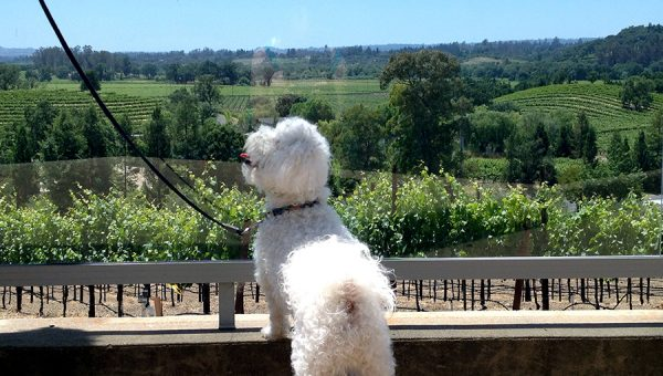 The 8 Best Dog-Friendly Wineries near San Francisco