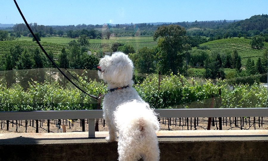 The 8 Best Dog Friendly Wineries Near San Francisco