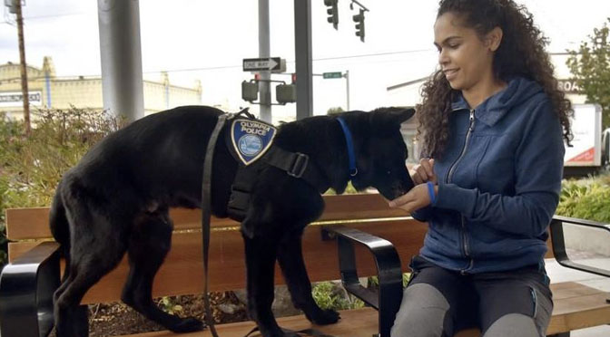 semper the k9 therapy dog
