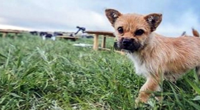 stray dog adopts runner during ultramarathon across the gobi desert