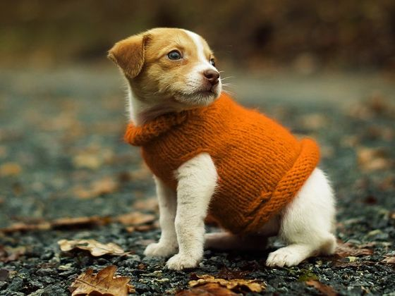 rank the cutest sweater weather dogs
