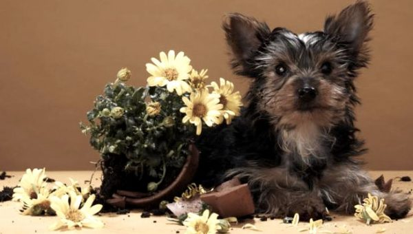 15 Common House Plants That Are Poisonous to Dogs