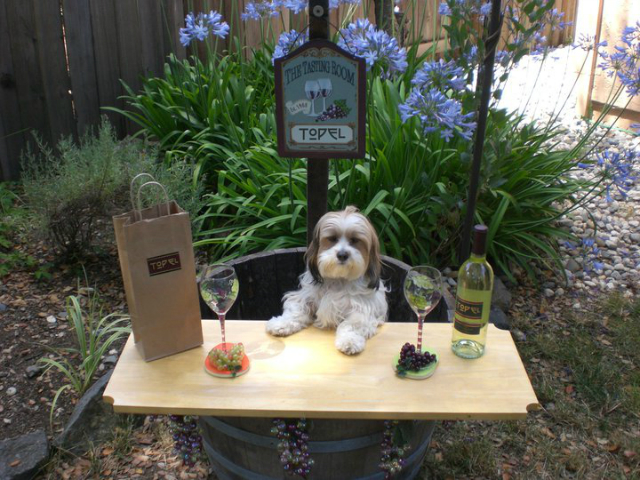 Topel encourages you to take photos of your dog at the tasting room. They might be featured in the yearly calendar! Photo via Emma's Paw Prints.