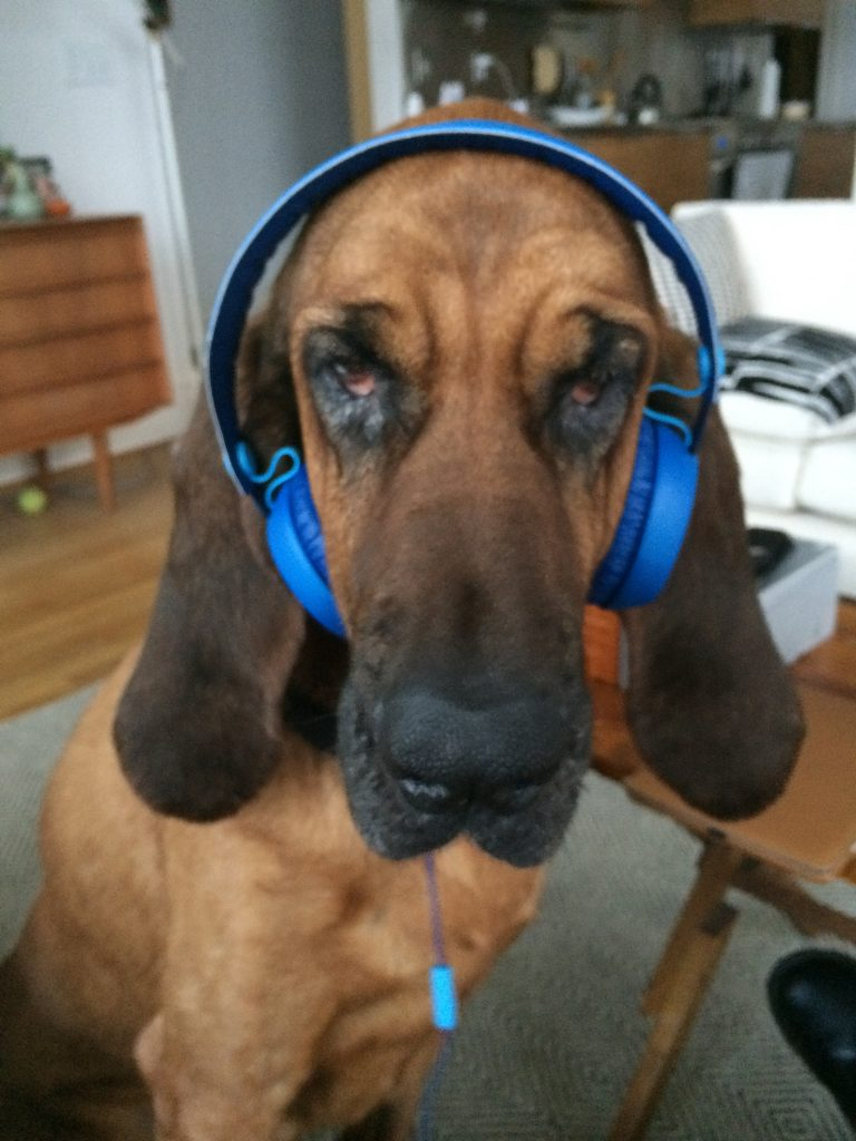 dog listening to music do dogs like music