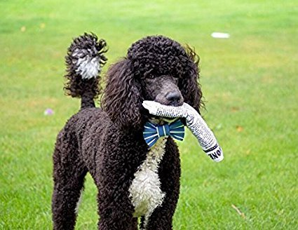 Why do dogs eat tissues?