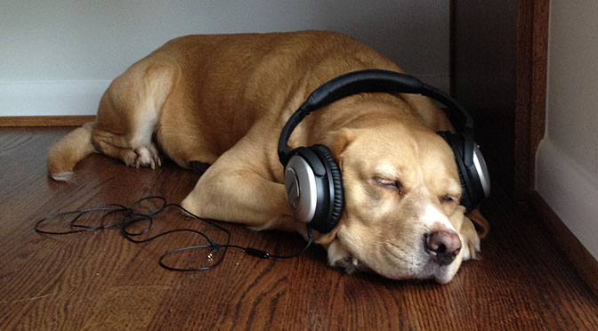 Image result for dogs listening to song