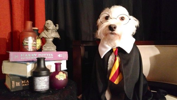 Which Dogs Belong to Which Hogwarts House?