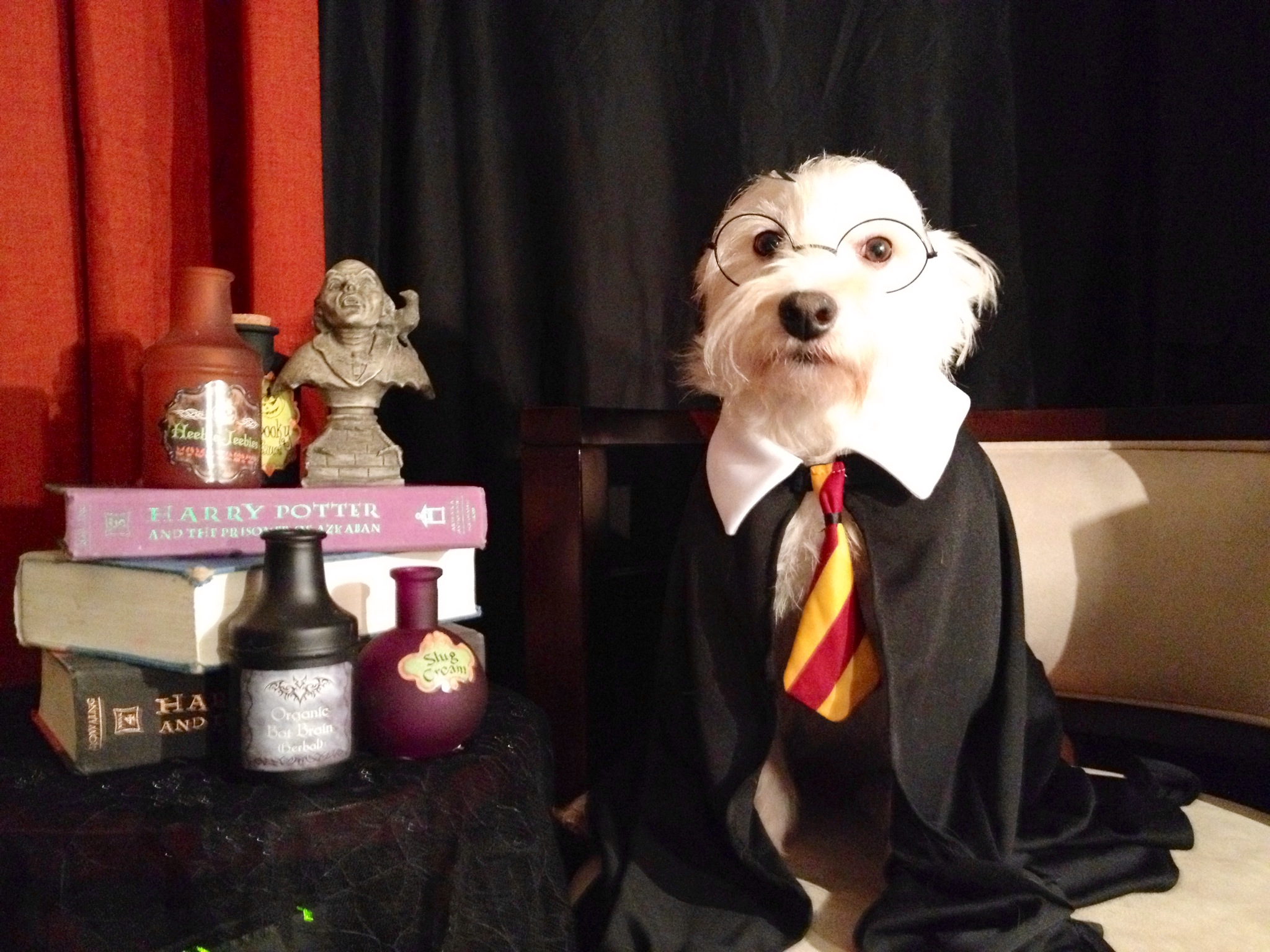 What Hogwarts House Is My Dog In