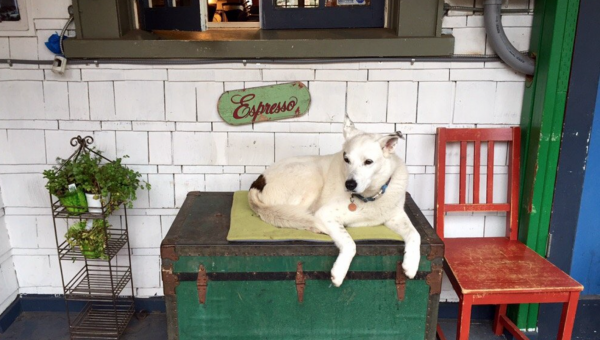 8 Dog-Friendly Coffee Shops in Seattle