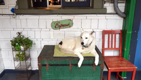 8 Dog-Friendly Coffee Shops in Seattle