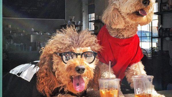 8 Dog-Friendly Coffee Shops in NYC