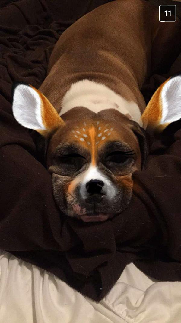boxer deer filter snapchat