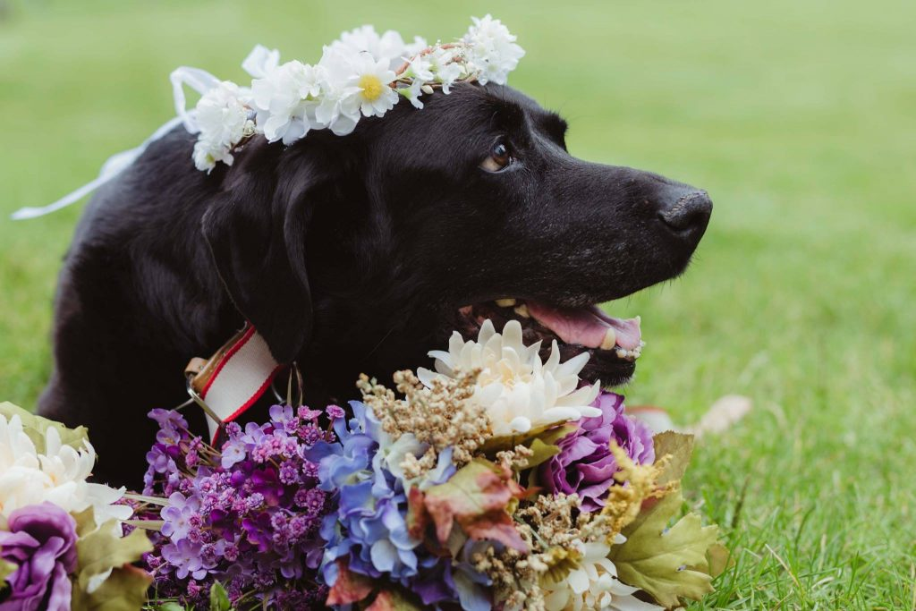 Maid of Honor Carries Bride's Dying Dog Down the Aisle in Display of