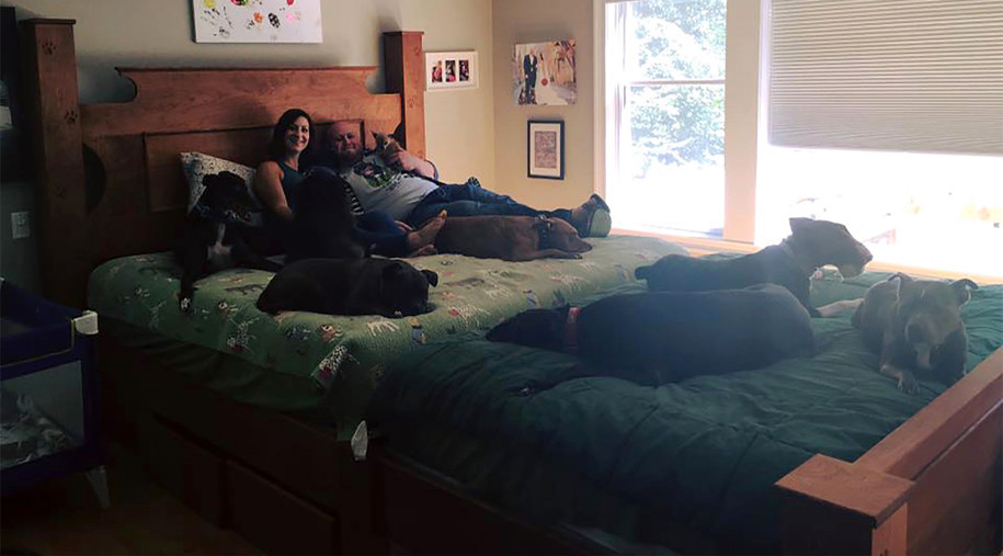 couple-get-custom-giant-bed-to-share-with-dogs