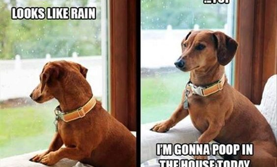 What to Do When Your Dog Hates the Rain