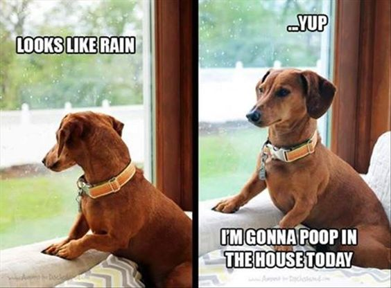 Dog Wont Eat When It Rains