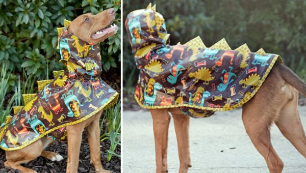 12 Stylish Dogs Showing Off Their Fancy Raincoats and 1 Fashion Emergency