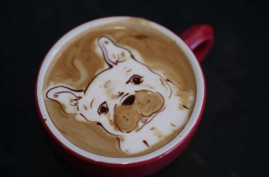 8 Dog Friendly Coffee Shops In San Francisco Rover Com