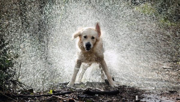 10 Hilarious Gifs of Dogs Absolutely Loving the Rain