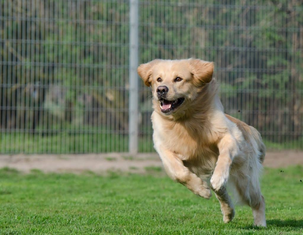 6 Foolproof Ways to Get Your Dog to Come When Called   The