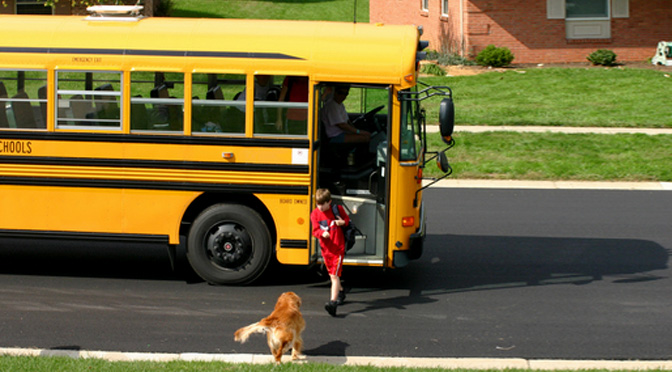 dogs excited to meet their kids at the school bus