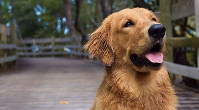 enzo the dog instagram